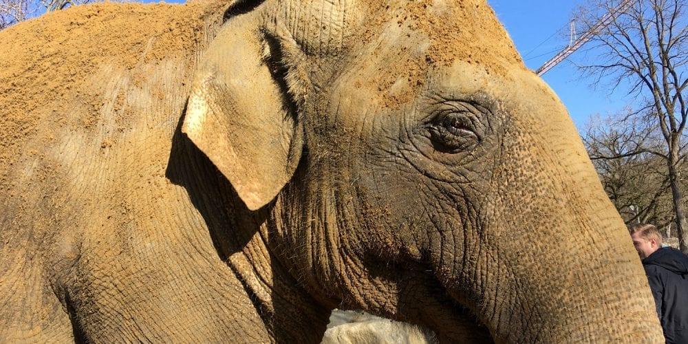 glas seele sposert das neue Elefantenhaus im Zoo Augsburg