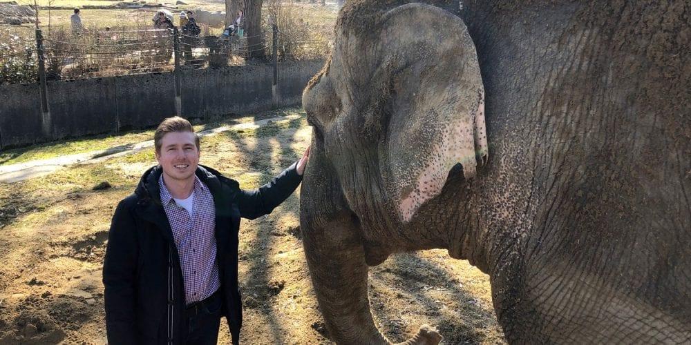 glas seele sposert das neue Elefantenhaus und Panzerverglasung im Löwen- und Leoparden-Areal